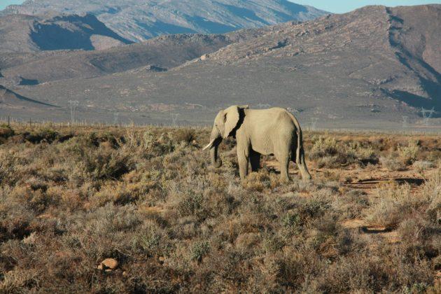 Safari próximo da Cidade do Cabo 2