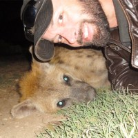 Finding Friendship In The City Of Hyenas