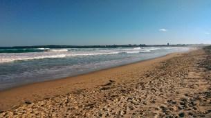 Cronulla Beach: Crow Feeding Dead Bird