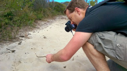 Coast Track Wild Life: Ant