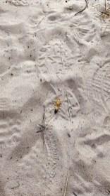 Coast Track Wild Life: Grub