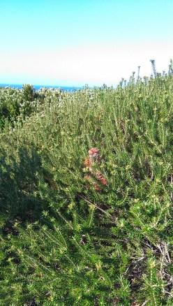 Coast Track: Plant