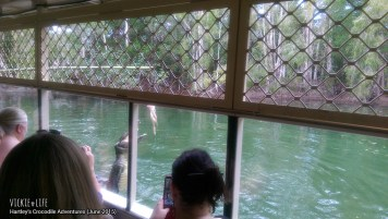 Hartley's Crocodile Adventures, June 2015: Short Boat Tour
