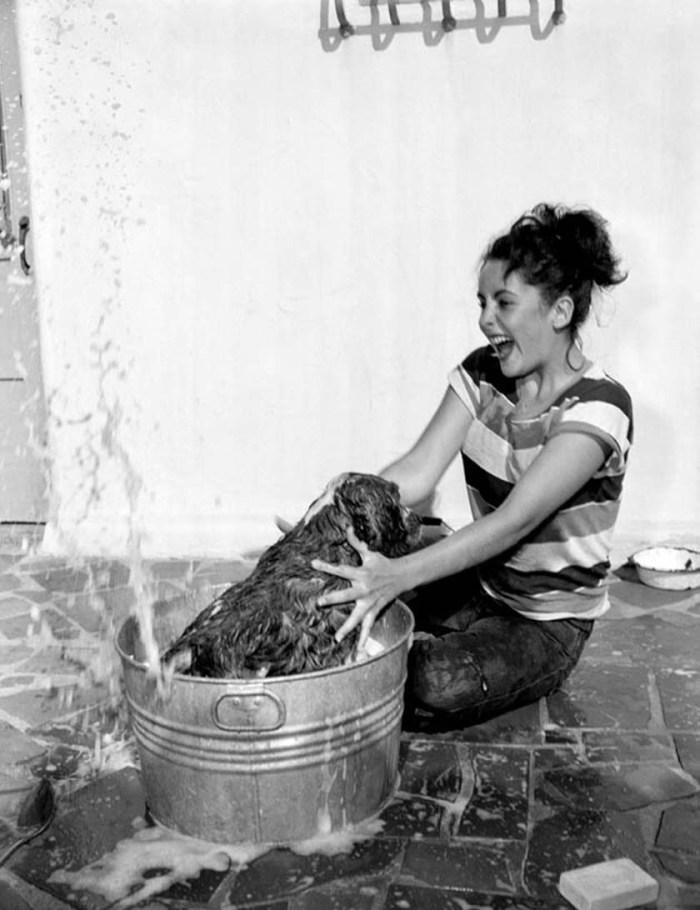 Spaniel splashing Elizabeth Taylor