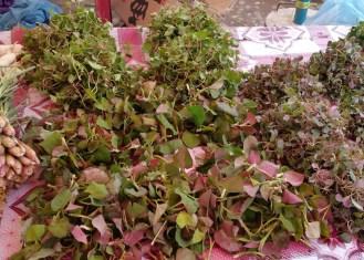 'herbals' as Dao calls them
