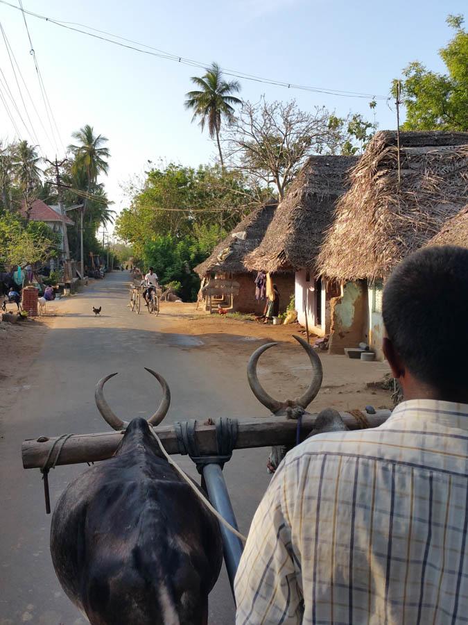 Clopping through the village