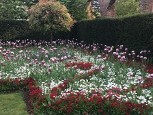 Holland Park Flowers