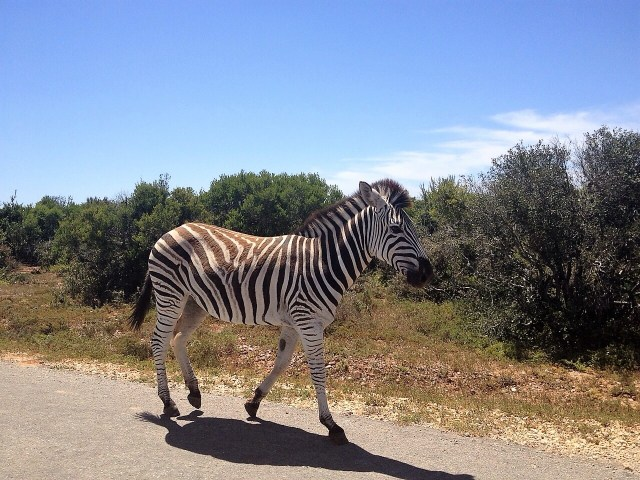 Vorsicht - Zebra Crossing