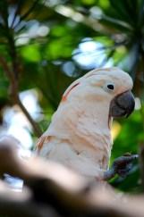 exotic pink bird