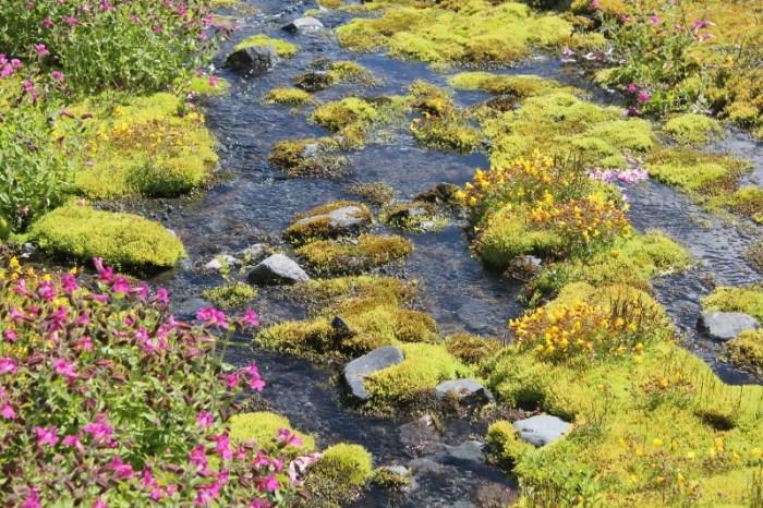 여름철에는 갖가지 빛깔 고운 고산지대 들꽃들을 보는 것도 큰 즐거움이다.