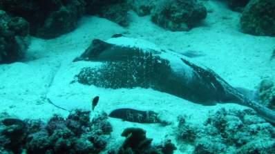 Chiara-Cove-Second-Dive-2