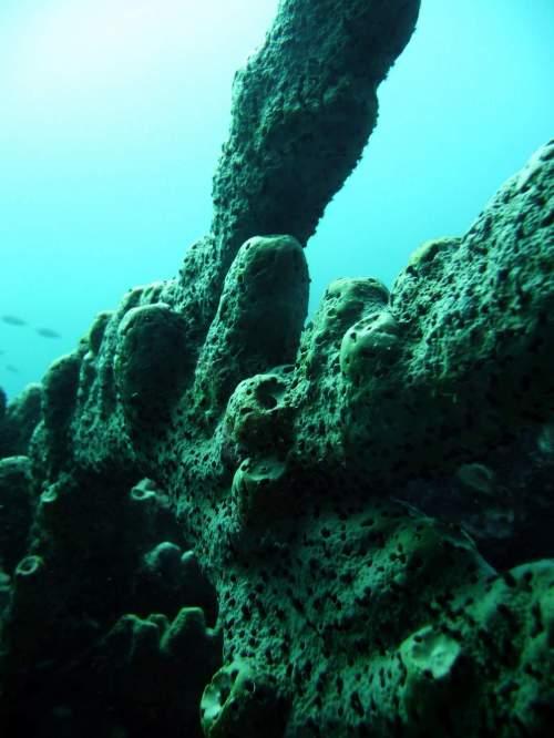 diving-at-kalki-19