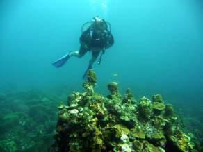 diving-at-kalki-23