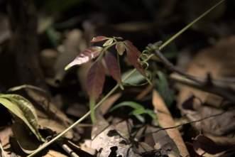 jungle-in-suriname-103a