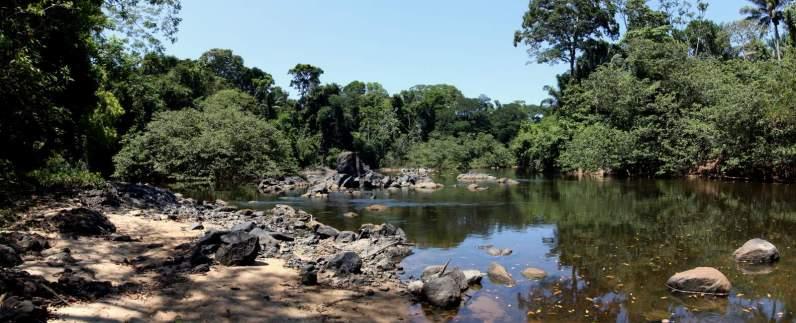 jungle-in-suriname-157