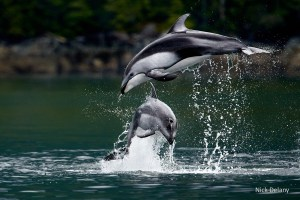 Dancing a Duet by Nick Delany