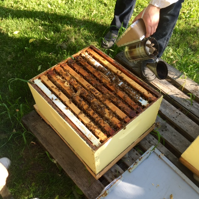ABC Bees: An Urban Honey Experience
