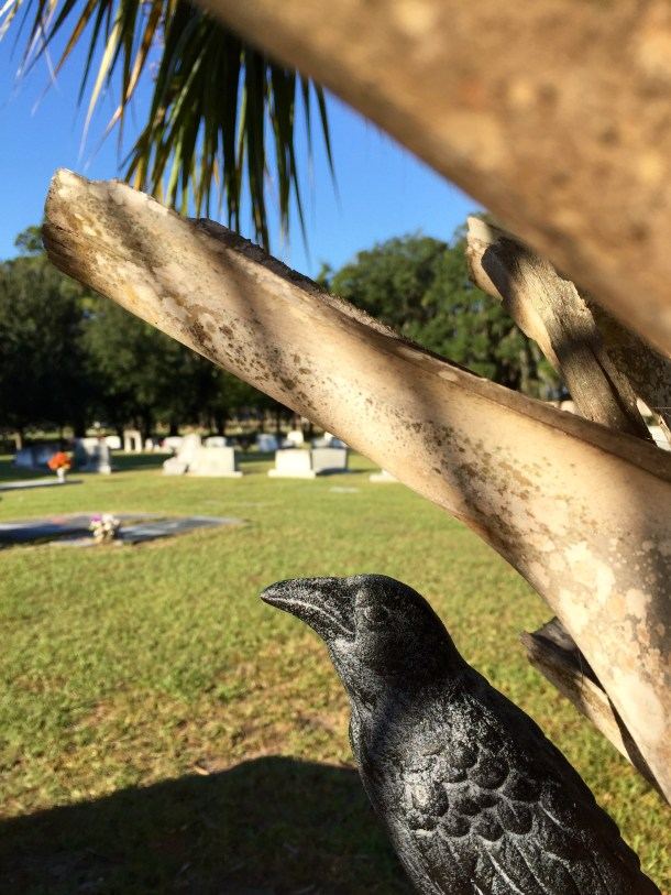 Nevermore enjoying the beautiful Autumn day at Greenwich Cemetery in Savannah.