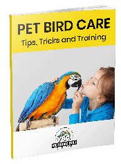 Green Cheek Conure Melbourne | Your NEW Best Friend | CALL