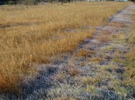 Frosty grassland roadside