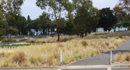 native grasses line the entrance