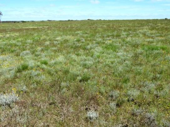 native grassland