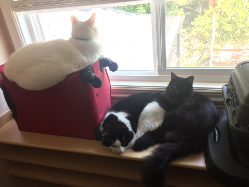 Three cats sitting on a table together. One cat is white, one cat is black, and one is black and white.