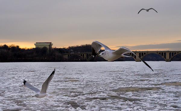 Frozen Potomac