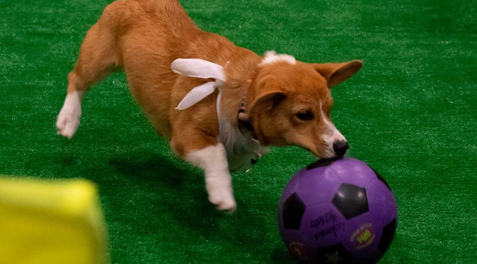 DC Puppy World Cup