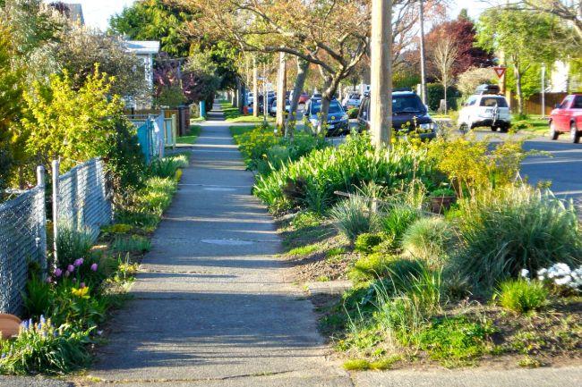 Scott Street boulevard gardens