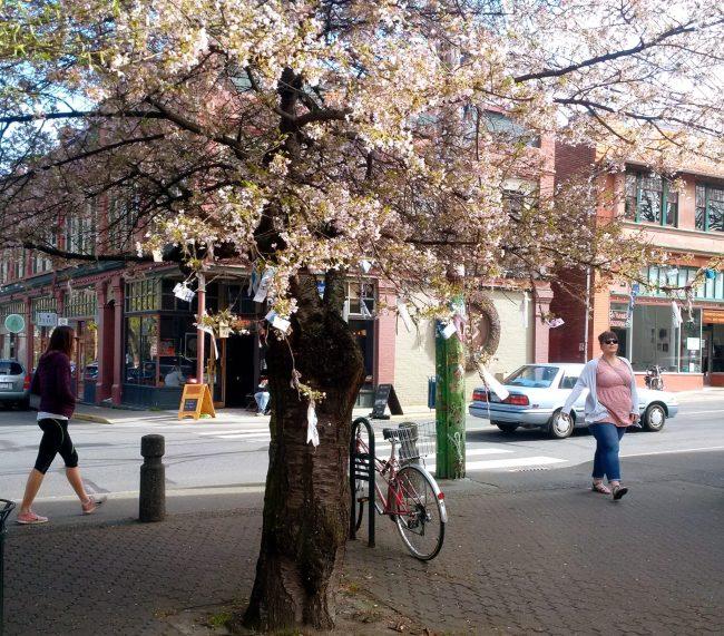 Fernwood square