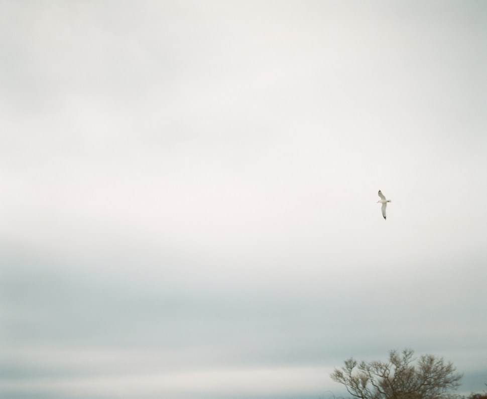 Gull and Tree (1 of 1)