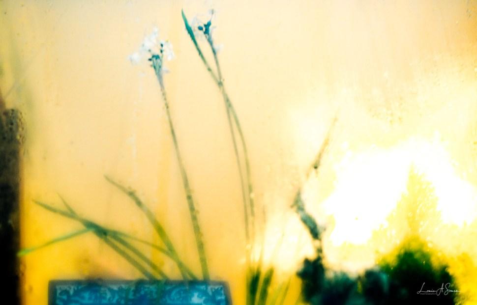 Flowers in the Window#4