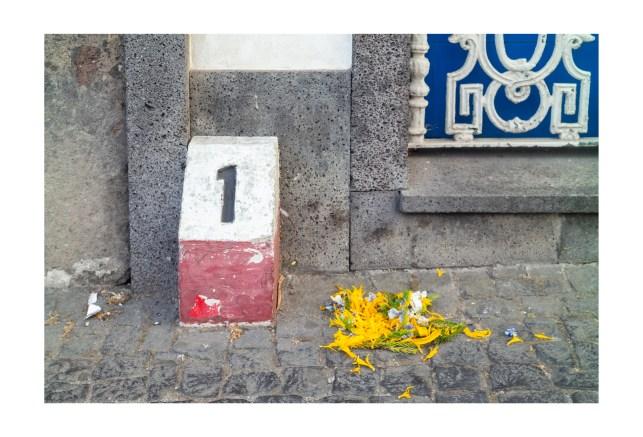 Flower Remnants