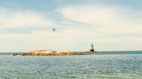 Gull and Lighthouse
