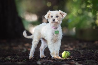 Dog Photography Sonoma County
