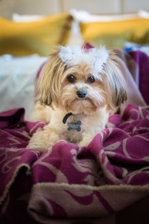 Pet Photography Sonoma County