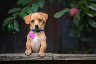 Sonoma County Pet Photography