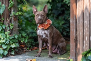 rescue_dogs_photographer_sonoma
