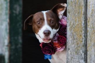 rescue_dogs_photographer_sonoma_county