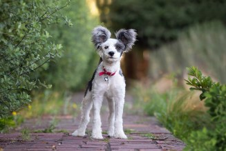 Sonoma County Pet Photographer