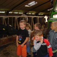 Even kijken in de koeienstal