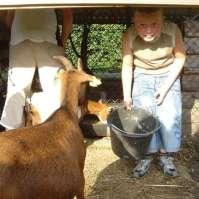 Donovan voert de geitjes