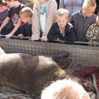 De jagers kwamen het door hen geschoten zwijn laten zien