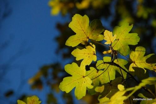 autumn-2011-10