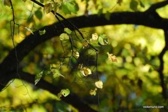 autumn-2011-17
