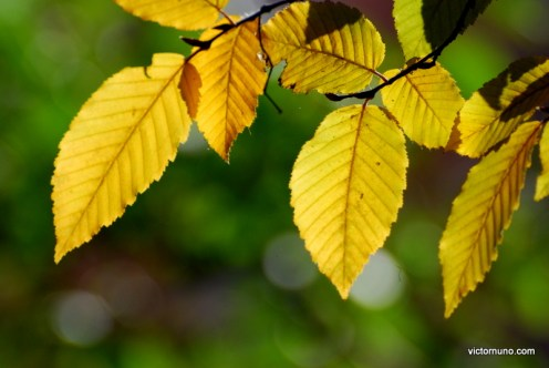 autumn-2011-34
