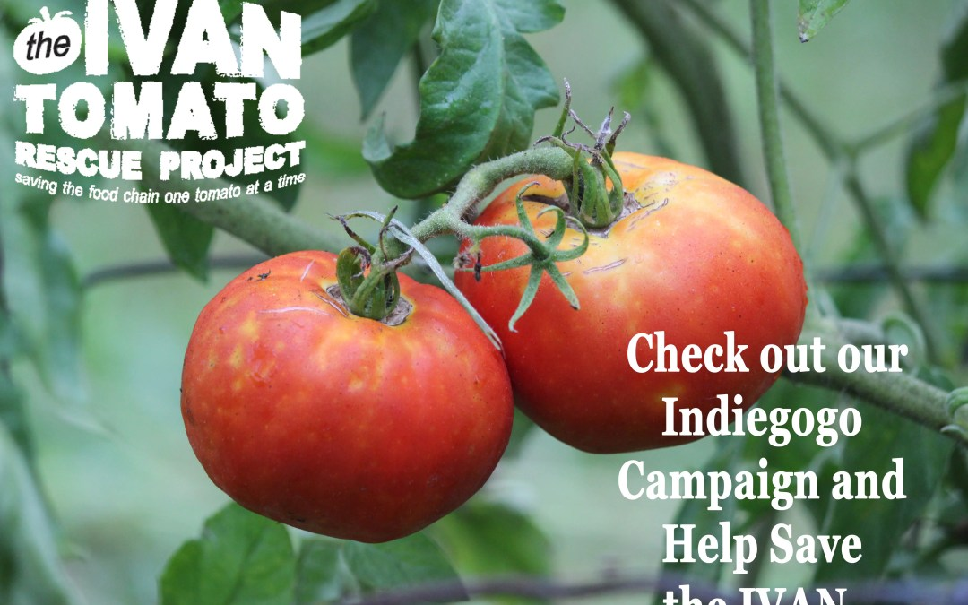 From Indiegogo to Farmers Market