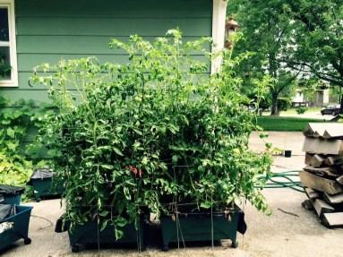 shawna's planter
