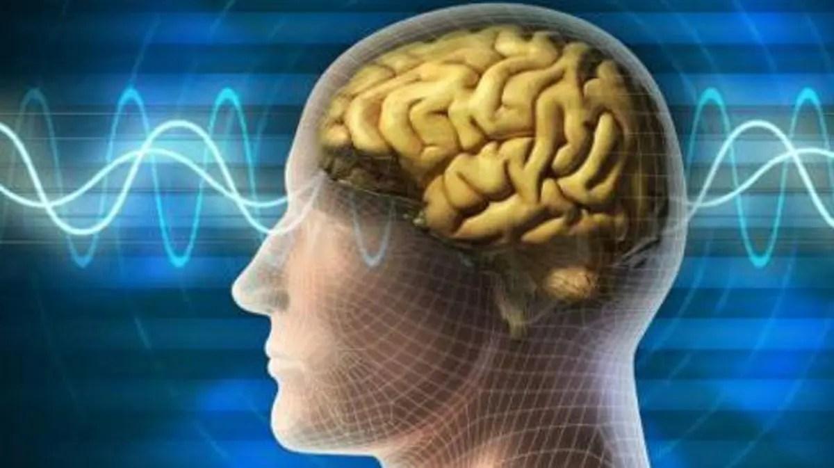 كم دقيقة يعيش دماغ الإنسان بعد الموت
